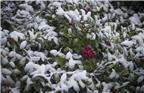 《2012年的那一场雪》心中的故乡来自于人生最初的记忆:袅袅的炊烟,浓浓的乡音,上学时同桌的漂亮女生,一场记忆深刻的雪。2012年的这一场雪,让我找到一种久违的心安。