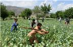 当地时间2018年4月10日,阿富汗楠格哈尔省Dara-i-Noor区,阿富汗安全部队人员摧毁非法罂粟作物。