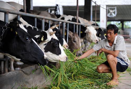 近年来,巴氏奶业务一直保持着较高的增速,根据中国奶业协会数据显示,2015年相比常温奶只有2.7%的增速,低温巴氏奶增速则高达24.3%。