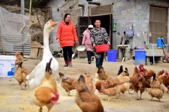 """2017年3月6日,安徽省岳西县和平乡和平村第一书记、驻村扶贫工作队队长、""""80后""""的王珍(左)在贫困户开办的养鸡场里了解情况。"""
