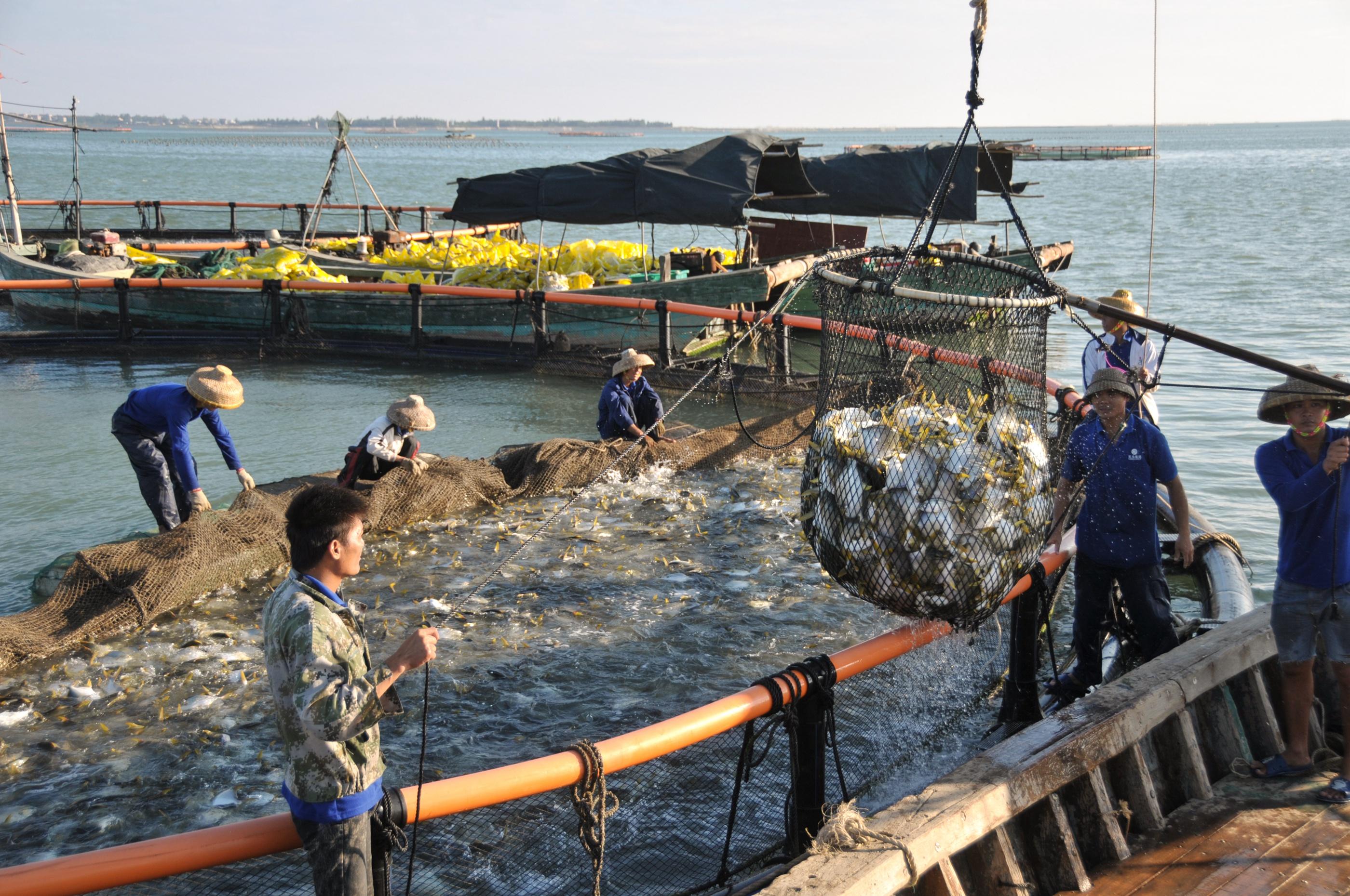 天马科技客户金鲳鱼喜获丰收