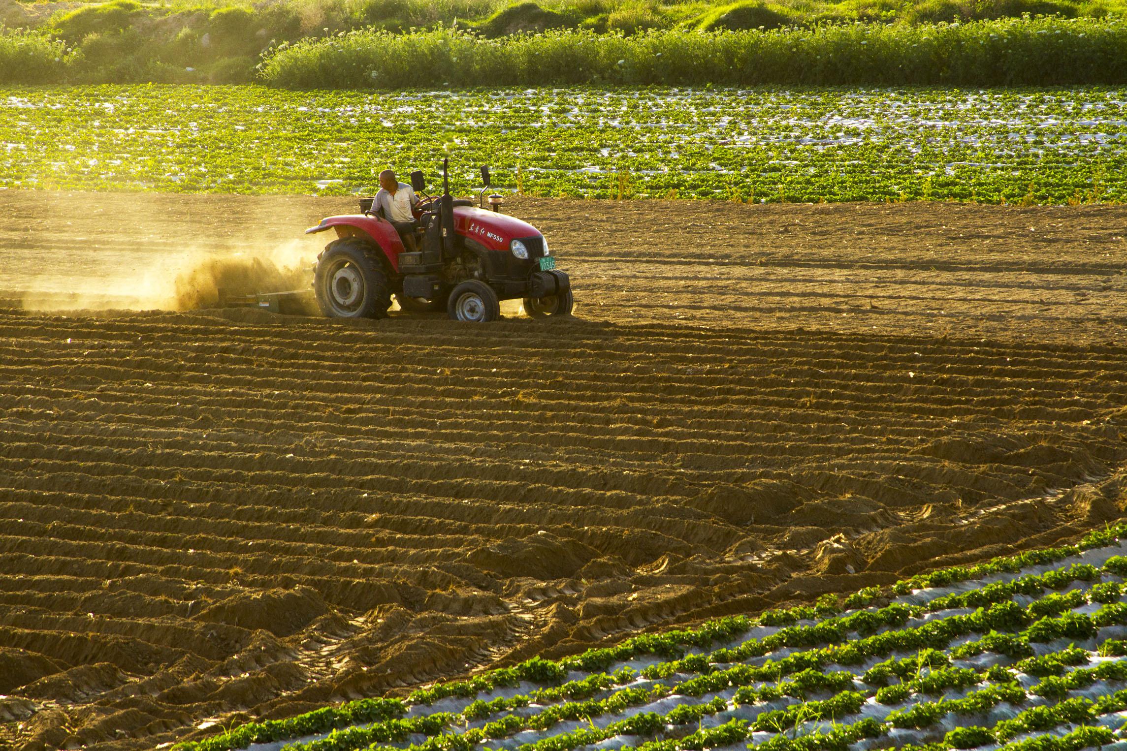 """保护提升耕地质量,农业部力倡""""亲土种植""""_第一财经"""