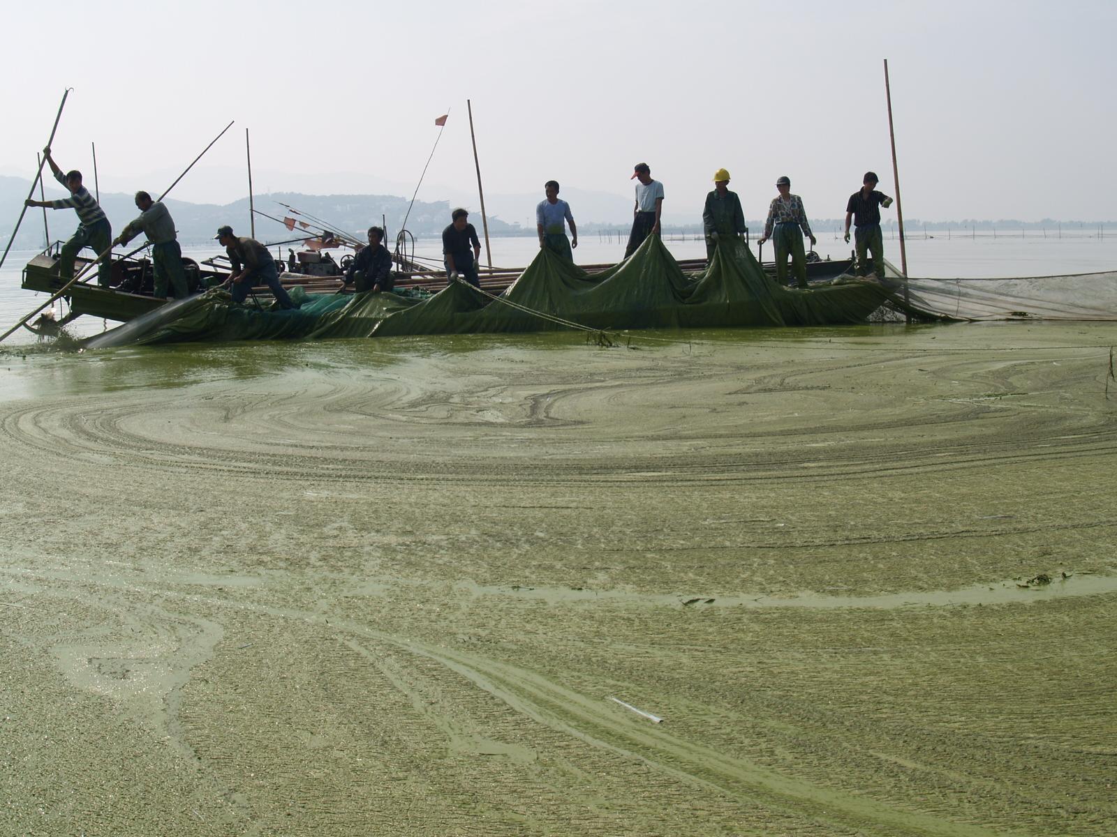 2006年,湖州市打撈太湖藍藻 湖州市委宣傳部供圖