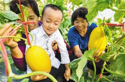 2017-2018年海南(國際)瓜果菜新品種及配套農機資材展示會上,展出的品種僅西瓜、甜瓜品種就有173個。