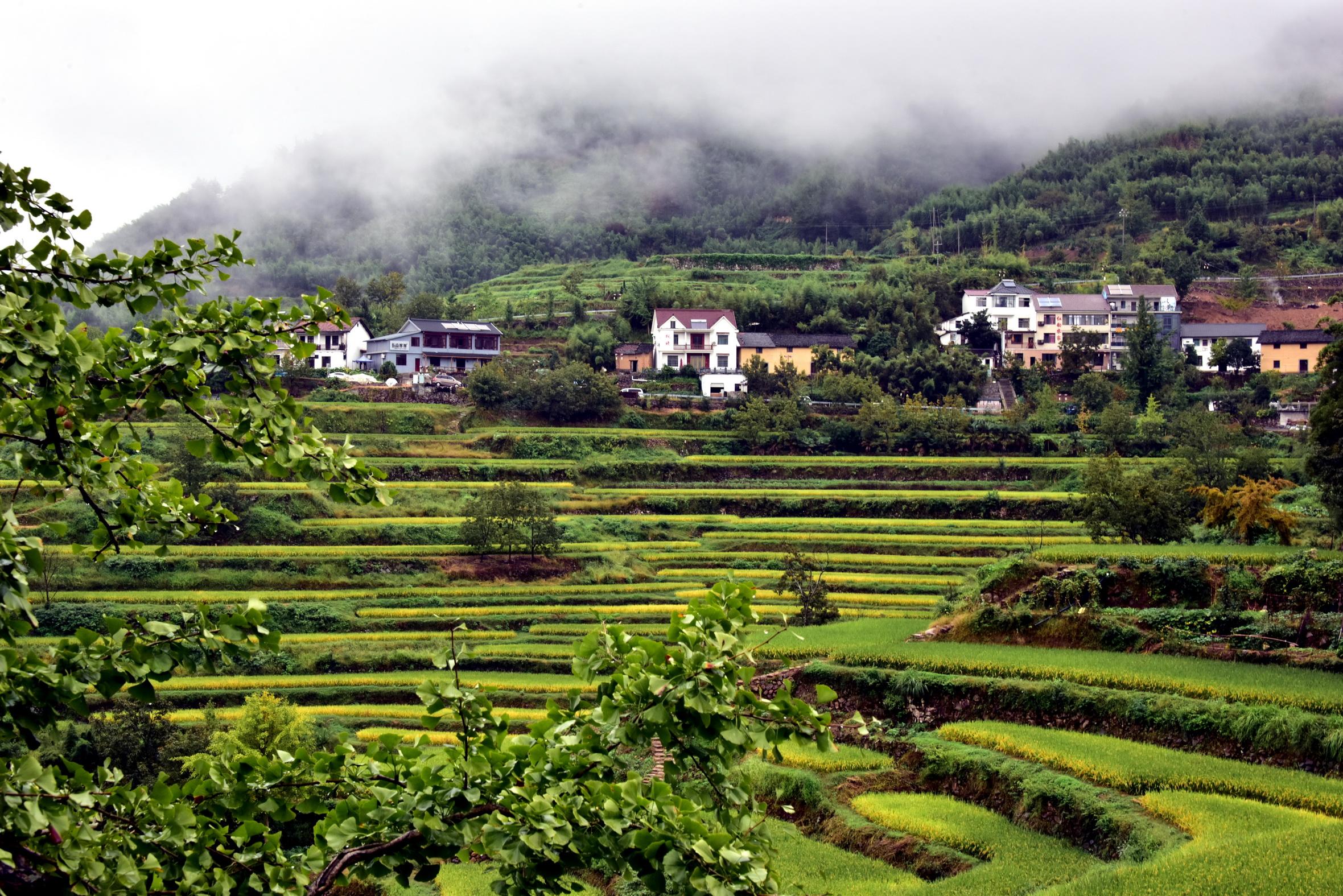 在如今的浙江,山水相依、桃源春色的自然秀美風光已隨處可見。攝影/章軻