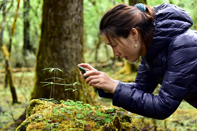 天然林保護工程實現了較好的生態效益,森林資源得到恢複性發展。圖為一位參觀者在拍攝樹墩上的幼苗。攝影/章軻