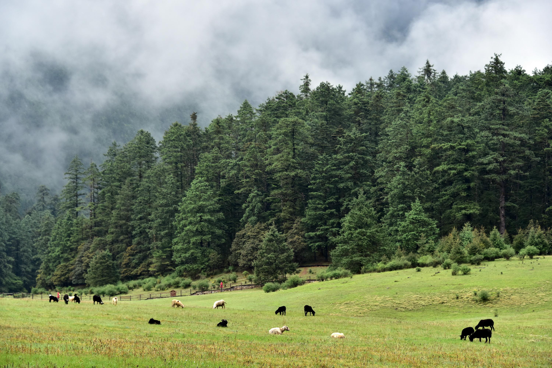 玉龍雪山省級自然保護區的自然風光。攝影/章軻
