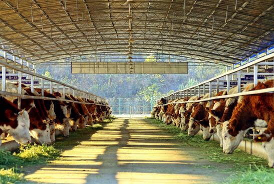 扶贫牛超市