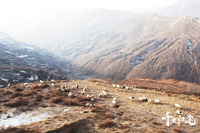 东乡山峦起伏,全县有1750条梁,3083条沟。羊是东乡农民最重要的收入来源之一。摄影/戴茜