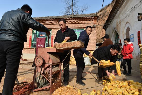 山西省武乡县大有乡王庄沟村,村民在给玉米脱粒。新华社资料图
