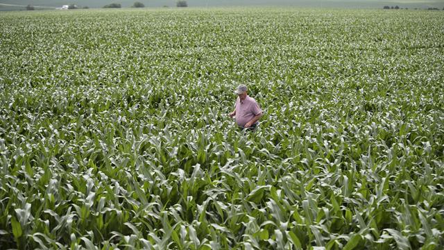 美国艾奥瓦州大西洋镇玉米地  来源:新华社