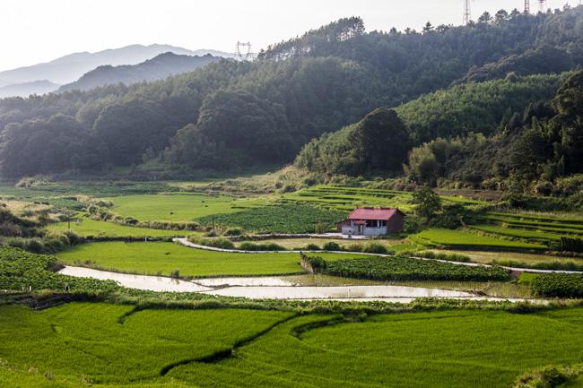 九龙村村民的祖先大多是元代的时候迁来的,更早则是唐宋时期从河南入福建的中原氏族。  摄影/吴军