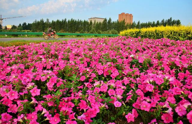 黑龙江省萝北县城市风光。摄影/章轲