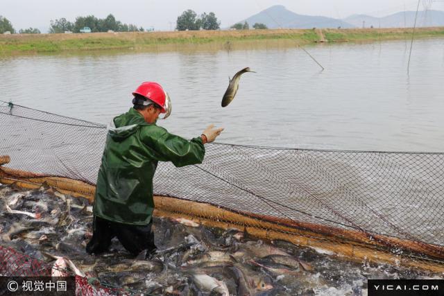 图为一名渔业工人将捕到的小鱼放归河中。