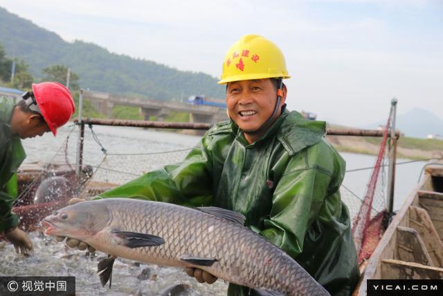 图为养殖户展示捕获的大鱼。