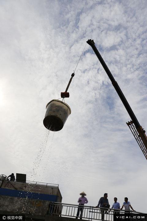 图为养殖户将捕获的河鱼通过起重机吊到岸上商贩的水车。