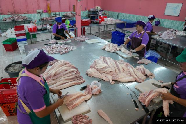鳄鱼肉每公斤可卖到300泰铢(约合人民币60元)。鳄鱼胆汁和血被认为对健康有益,也会被制成药丸,每公斤胆汁和鳄鱼血的售价分别为4万泰铢(约合人民币8000元)和500泰铢(约合人民币100元)。图为一间鳄鱼肉加工厂。