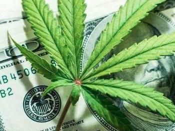 工业大麻风口狂嗨,可你真的了解这个概念吗?