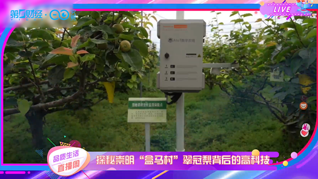 """视频丨品质生活直播周:探秘崇明""""盒马村""""翠冠梨背后的高科技"""