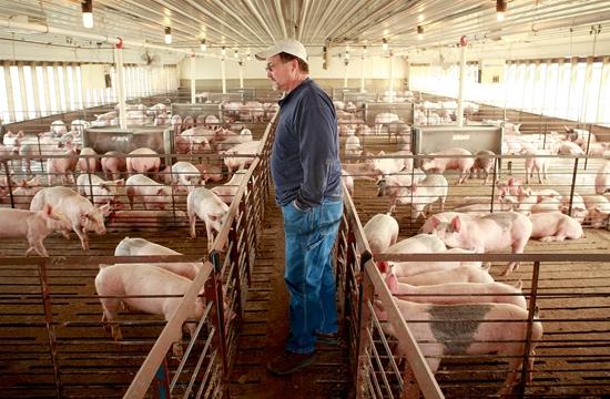 美國艾奧瓦州的養豬戶。資料來源:CNBC