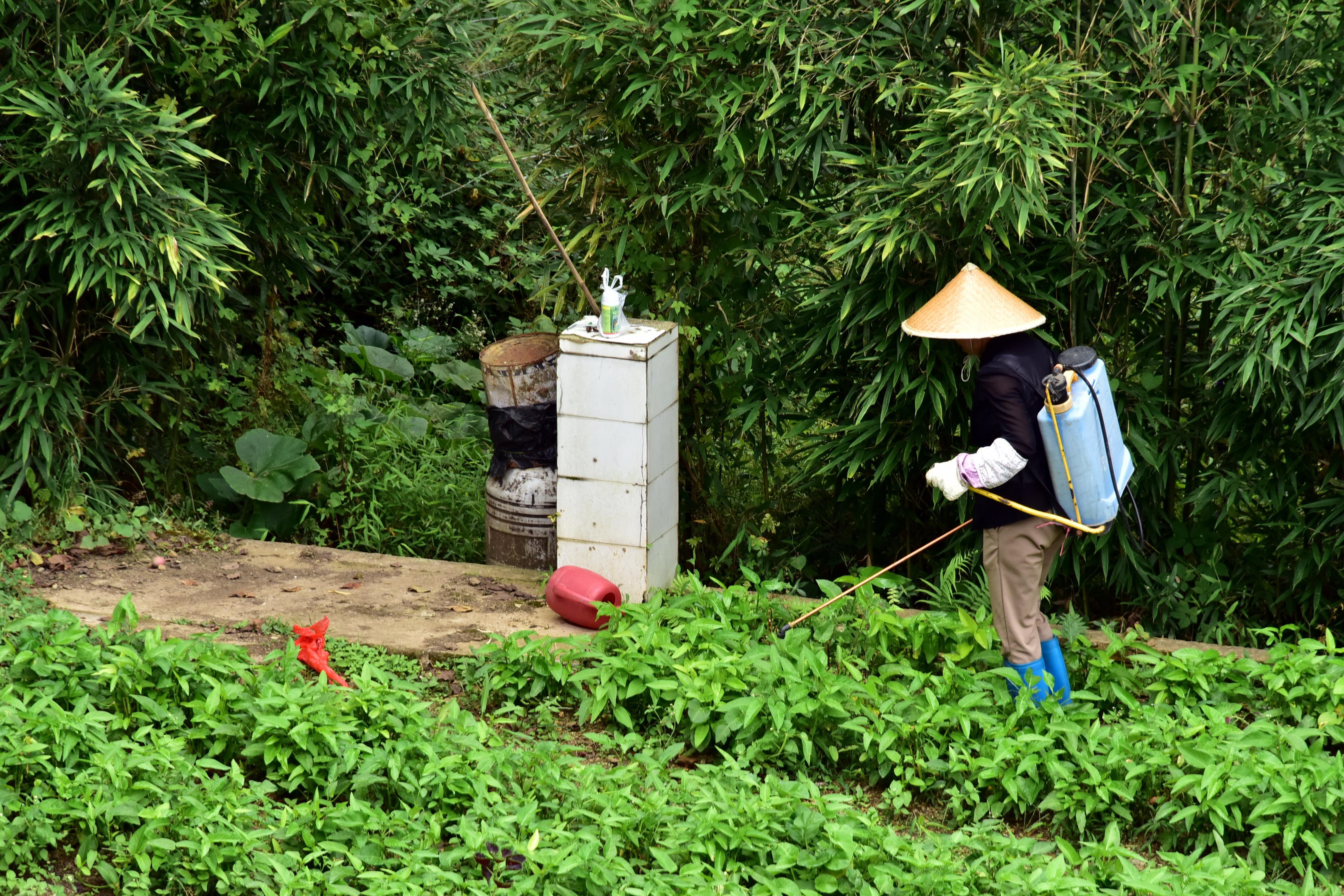我國許多地區化肥農藥使用量較多,多數作物的畝均用量高於發達國家的平均水平。攝影/章軻