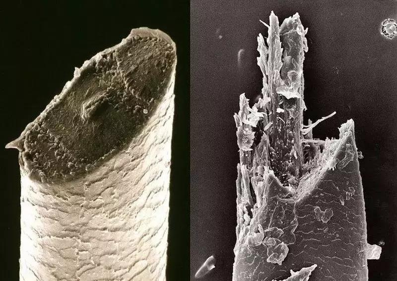 显微镜下的胡须,左边手动剃须后,右边电动剃须后