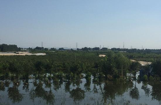 彌河邊被淹的黃桃果園,最深時水沒過了樹梢。李攻/攝