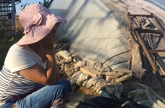 在山東壽光市的紀臺鎮孫家村,一名女菜農面對自家的蔬菜大棚抽泣,她家六個大棚全毀。李攻/攝