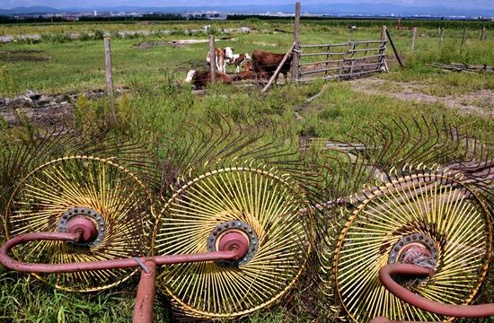 9月6日,位于珲春东北虎国家级自然保护区实验区的珲成养牛合作社。摄影/章轲