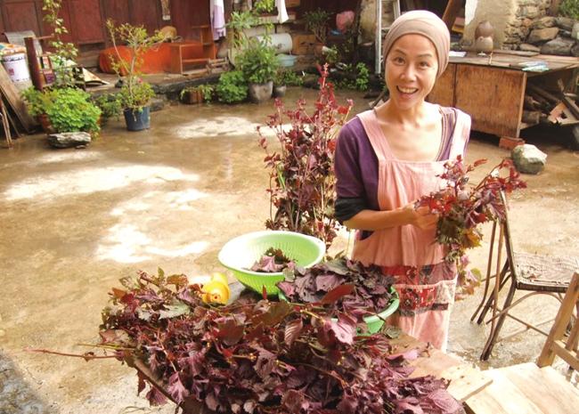 阿雅从田里收回来的紫苏,做紫苏鱼和饭团,还用紫苏染布。