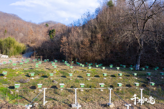 周世红的养蜂配相符社鸟瞰。摄影记者/任玉明