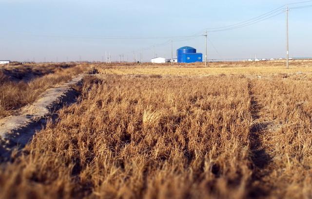 雏鹰公司征用草场内违规改变草原用途种植水稻。资料来源:中央环保督察组