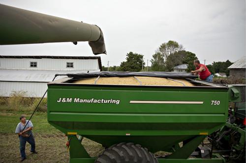 美国豆农今年有些流年不利