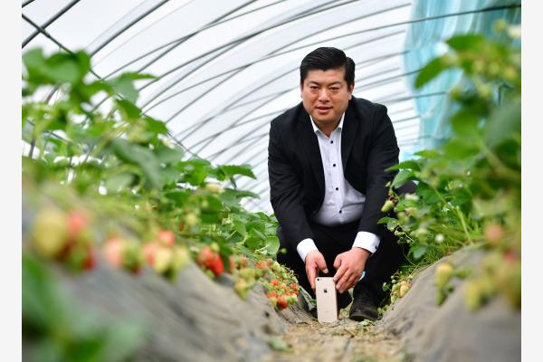 """""""网红农民""""翟文波在西安市长安区长安草莓种植基地大棚内进行视频直播。新华社资料图"""