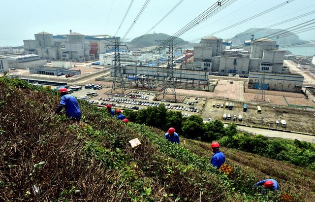 """宁德核电厂区,荣发园林公司的工人们正在打理""""和茶""""茶园。摄影/章轲"""