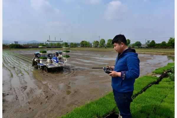 4月12日,在麻蓬自然村的农田旁,工作人员在遥控智能无人驾驶插秧机插种早稻秧苗。新华社发