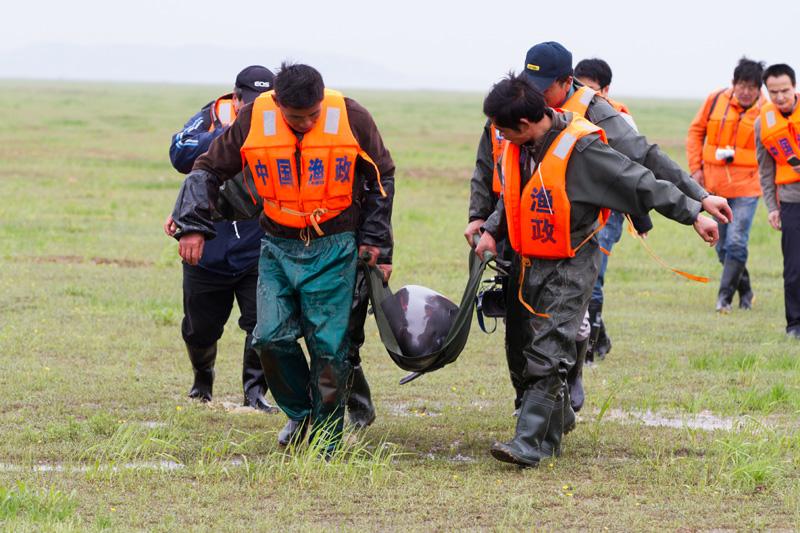 渔民上岸后,一片面成为渔政的补充力量,从网鱼到珍惜长江江豚,他们变成了长江的守护者  © 李岿