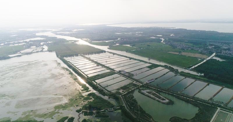 当代江南水乡的渔稻共作  © WWF