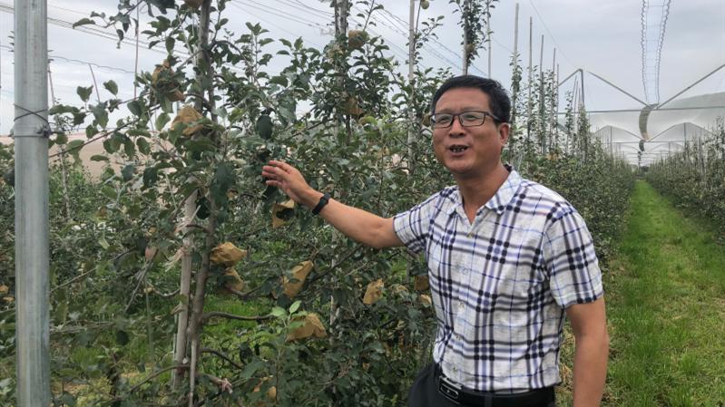 郑小义说,示范园种植的苹果将成为全镇又一个亿元产业。 邵海鹏/摄