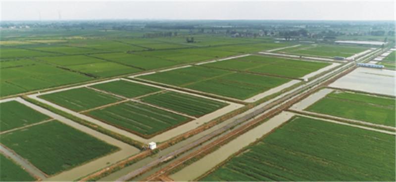 """现代农业基地以""""虾稻共作""""为切入点,打造""""稻渔综合种养""""生态农业产业"""