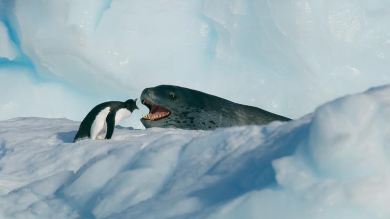 《七个世界,一个星球》共7集,每集讲述一个大洲上的故事,第1集是南极洲