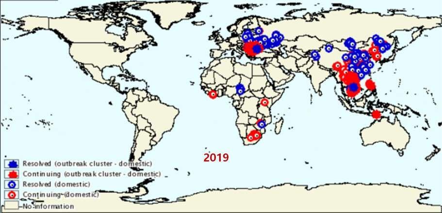 """国外战""""非瘟""""启示录:最成功的巴西,花了7年才根除"""