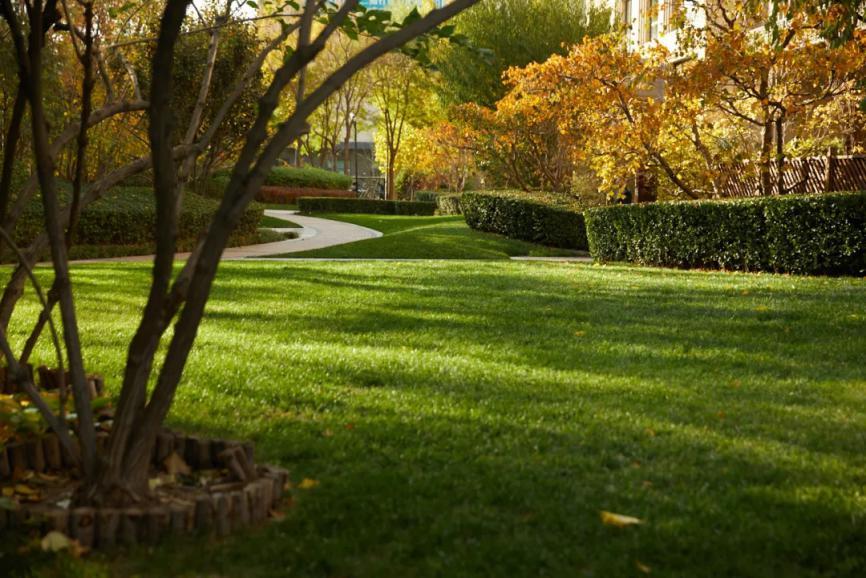 今年秋天的广渠金茂府园林