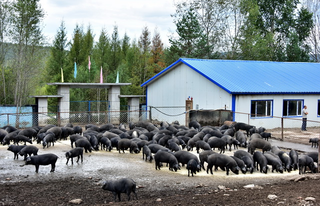 两部门规范畜禽养殖禁养区划定,防止地方一禁了之