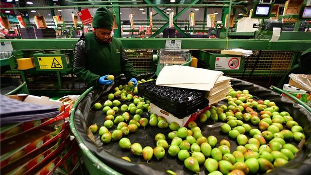 除猪肉外2020年彩霸王综合资料大全,智利近年首终稳坐中国进口稀奇水果的第一大供答国的交椅。