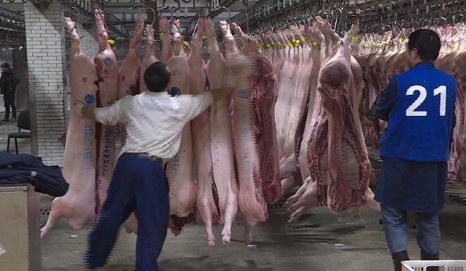 凌晨 上农批猪肉交易大厅