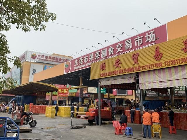 东莞最大果菜市场:今年水果产量增加,苹果降价市民想猛买