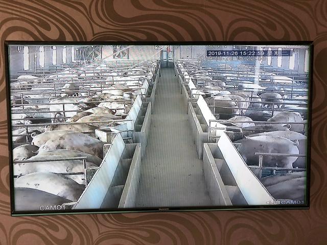 在洪顺家存放物料的房间墙壁上,挂着一面显示屏,显示的是养猪场内部的情况 邵海鹏/摄