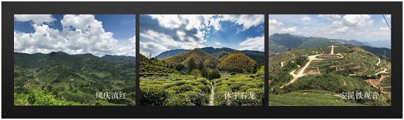 小罐茶在产业上游布局生态茶园助力茶农增收