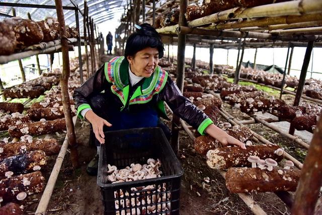 农村发展生态绿色产业是方向。摄影/章轲